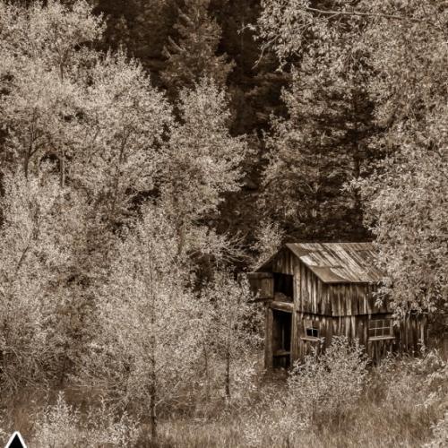 Abandoned Barn in Aspens, Colorado