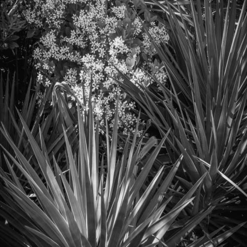 Foliage, Myrtle Beach State Park