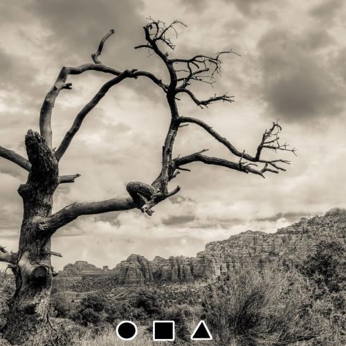 Spooky Tree in Sedona, AZ