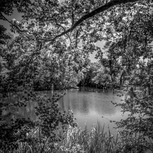 Waccamaw River.  Conway, SC.